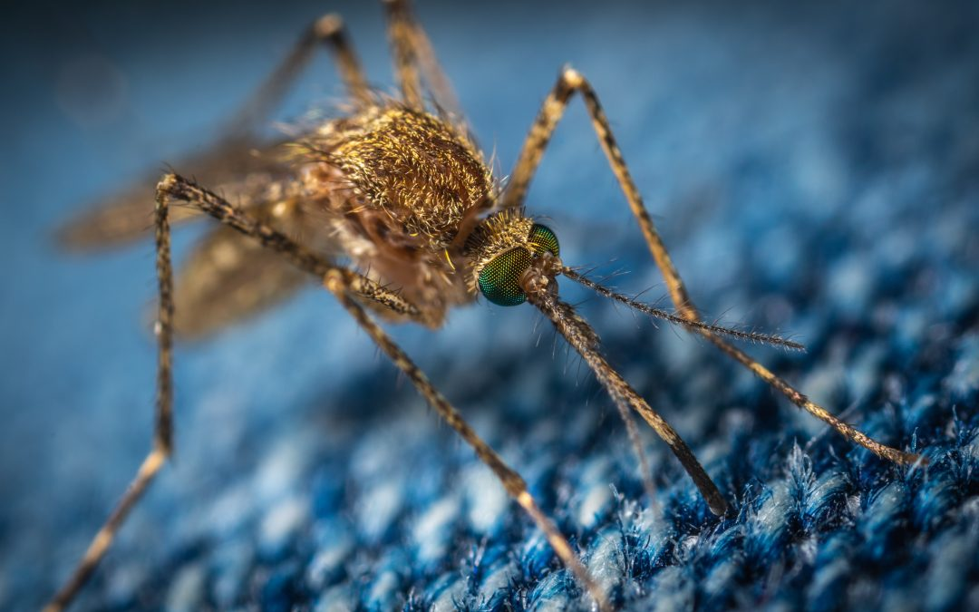 Testing Gene Drives in Mosquitos